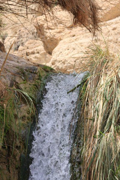 Flowing spring water in Ein Gedi